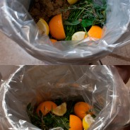 To Brine or not to Brine, The Holiday Time