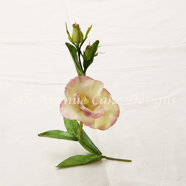 Flower paste Lisianthus  video tutorial